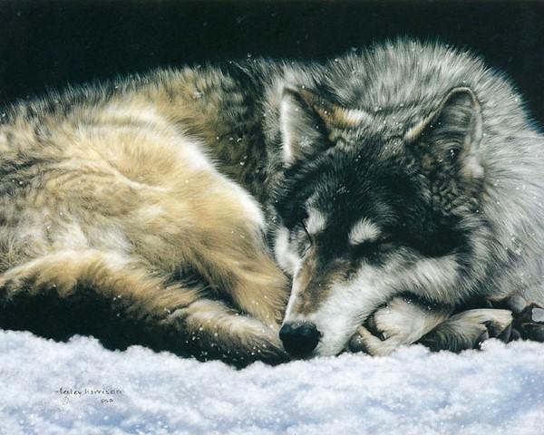 Картинки с волками прости