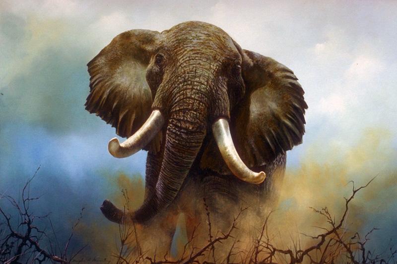 люди занимающиеся ловлей слонов используют для охоты длинные веревки